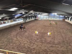 stallion show 2