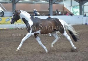 sarah whitehead stallion